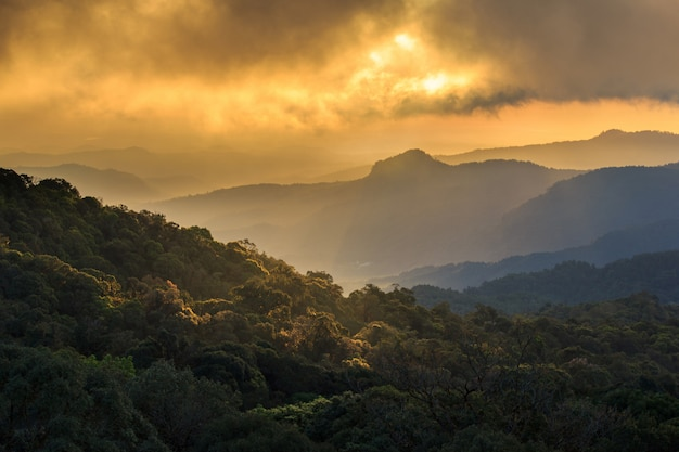 Golden sunbeams of autumn on a misty of inthanon mountain, chiang mai, thailand