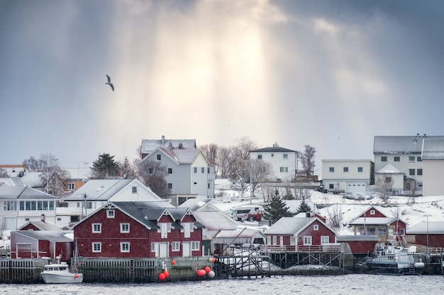 Golden sunlight over scandinavian village with bird flying