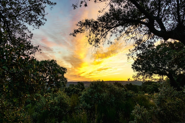 Золотой восход солнца в поле с восходом солнца на горизонте.