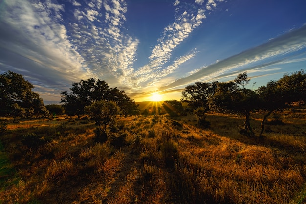 森を照らす太陽の光と黄金の夕日。