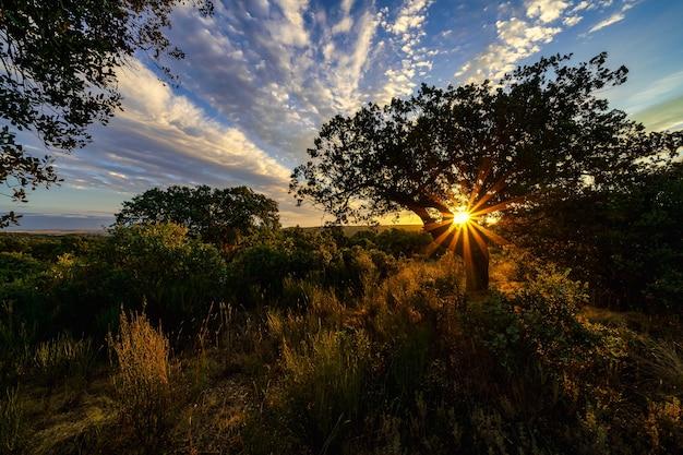 木の後ろに沈む夕日と黄金の夕日。