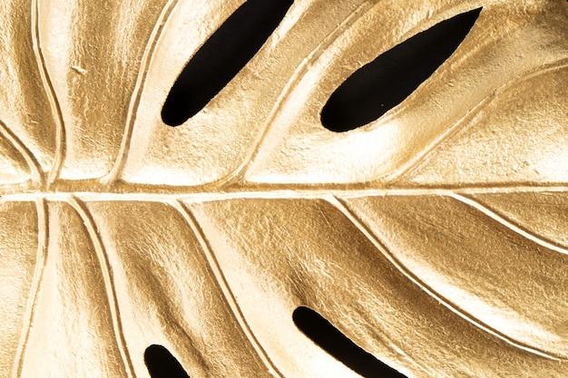 Golden tropical monstera leaf on black background close up