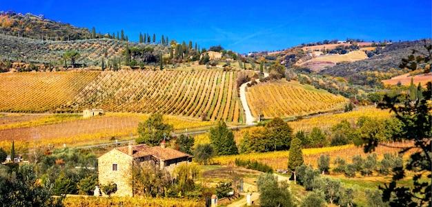 黄金のブドウ園。秋の色の美しいトスカーナの風景。イタリア