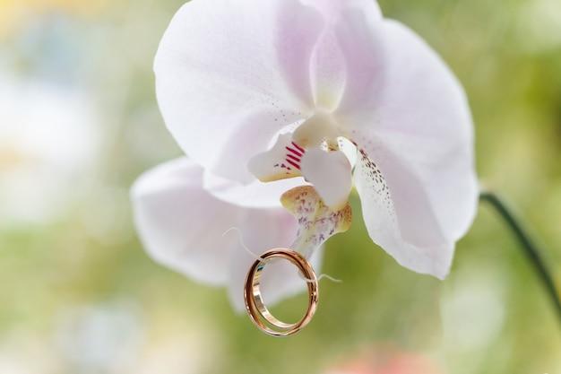 Золотые обручальные кольца на белой орхидее