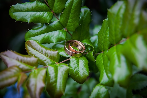 Golden wedding rings lie on leaves green plant.