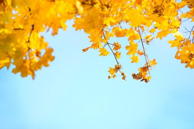 푸른 하늘에 황금색, 노란색, 주황색 잎. 가을 배경