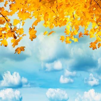 白い雲と青い空に金色、黄色、オレンジ色の葉。秋の背景