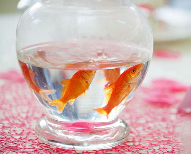 Goldfish in ampule used as centerpieces