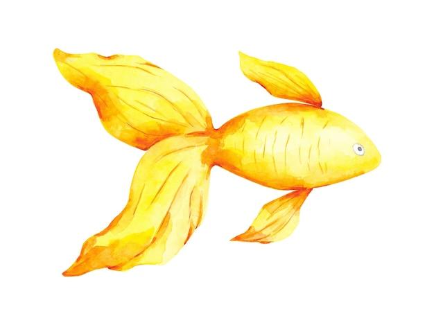 흰색 배경에 고립 된 금붕어 클립 아트 노란색과 주황색 물고기 그림