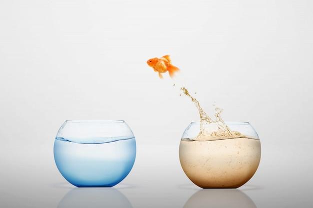 Золотая рыбка, выпрыгивающая в пресноводную миску
