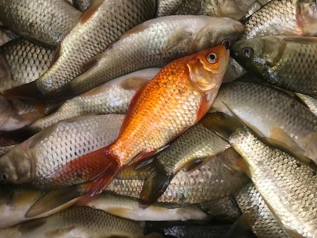 獲れたての魚と金魚。
