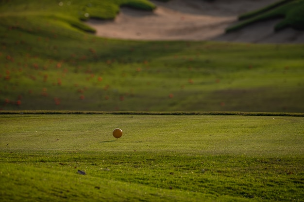 Golf field summer landscape