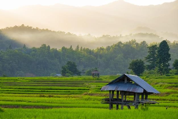 Хорошая атмосфера на рисовой террасе поля с хижиной во время заката с туманом на горе