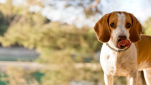Bravo ragazzo cane sfocato sullo sfondo della natura