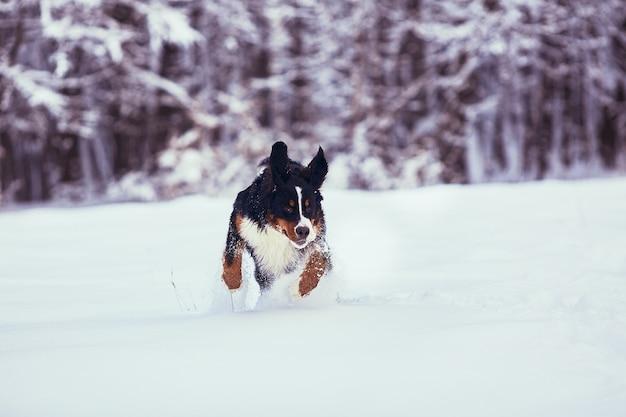 The good dog running along park