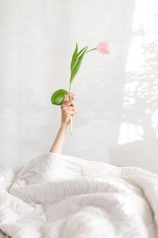女性の手でおはようピンクのチューリップ