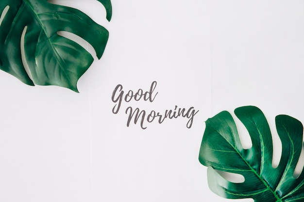 Good morning text on paper near the swiss cheese leaf against white background