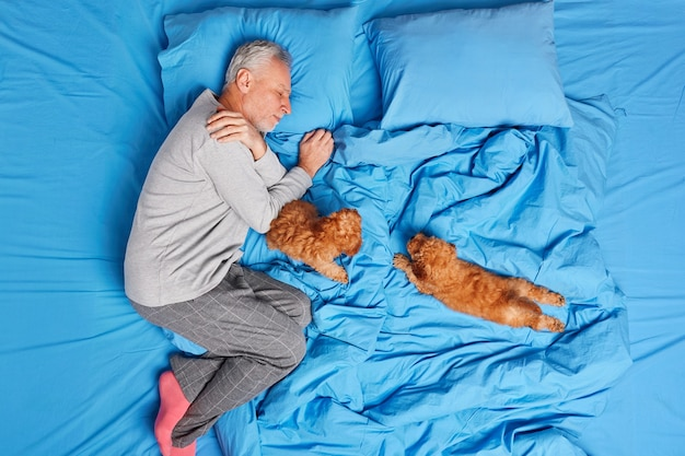 Good night concept. peaceful bearded grey haired man sleeps with two puppies in bed relaxes after hard working day enjoys domestic atmosphere wears comfortable pajama and socks sees sweet dreams