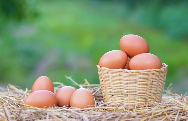 태국의 현지 농장에서 짚으로 바구니에 양질의 닭고기 달걀.