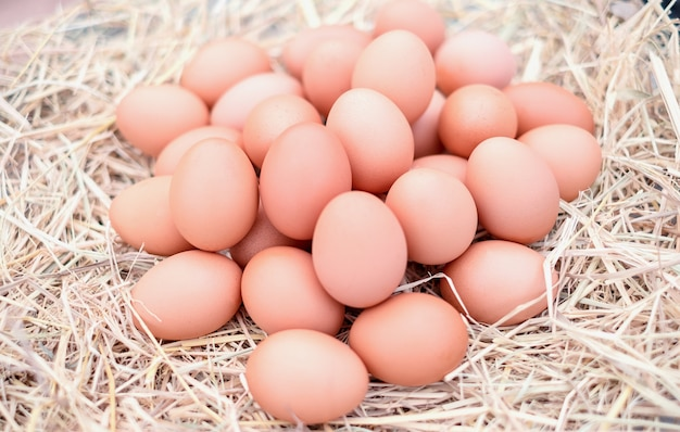 Good quality chicken eggs in local farms with straw. fresh, suitable for cooking
