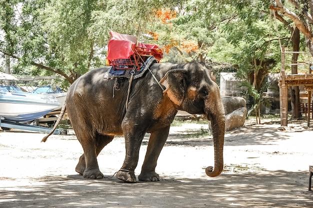 Хорошо обученные слоны со специальной зоной отдыха для туристов на улице.