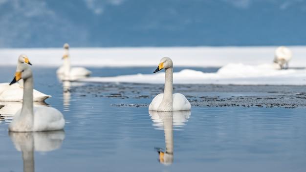 雪の湖でのガチョウの反射