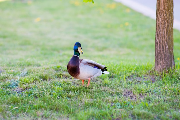 The goose is standing near the tree