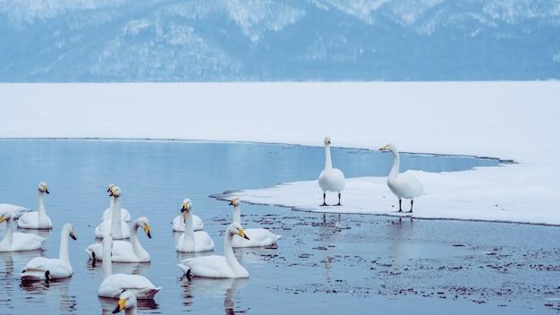 Гусиный вид на озеро зимой