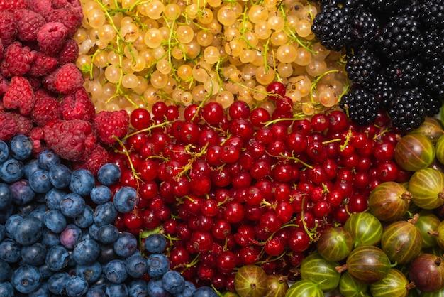 グーズベリー、ブルーベリー、クワ、ラズベリー、白と赤のスグリ。