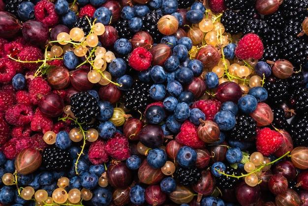 グーズベリー、ブルーベリー、クワ、ラズベリー、白と赤のスグリ
