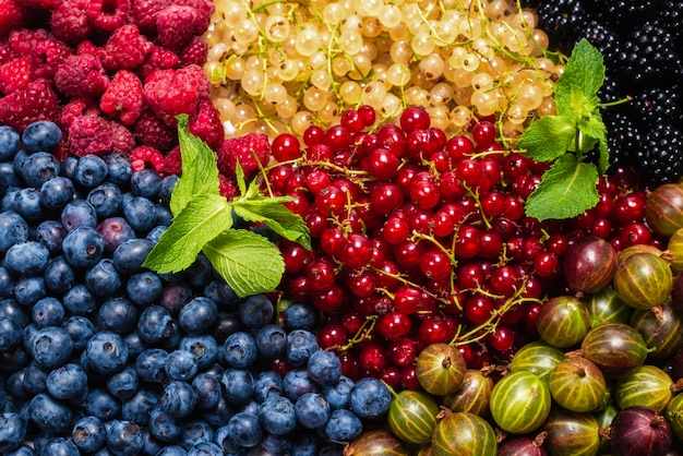 Gooseberries, blueberries, mulberry, raspberries, white and red currants space.