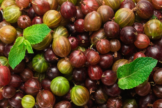 Gooseberry and mint as a background