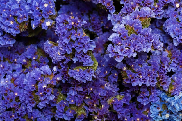 Splendida disposizione di fiori sullo sfondo