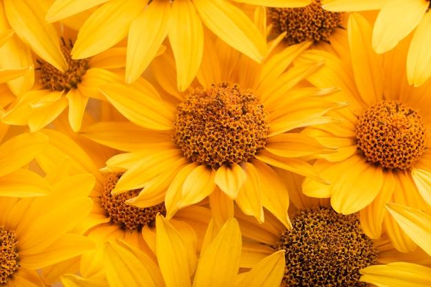 Splendida disposizione di carta da parati fiori