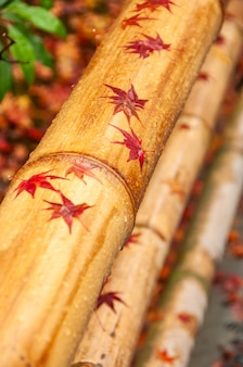 Gorgeous bamboo handrail with japanese maple wet red leaves over it, rain droplets in autumn days.