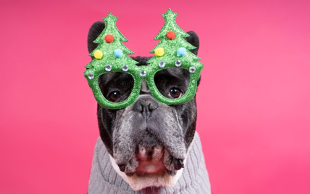 Gorgeous french bulldog dog with festive glasses 2021.