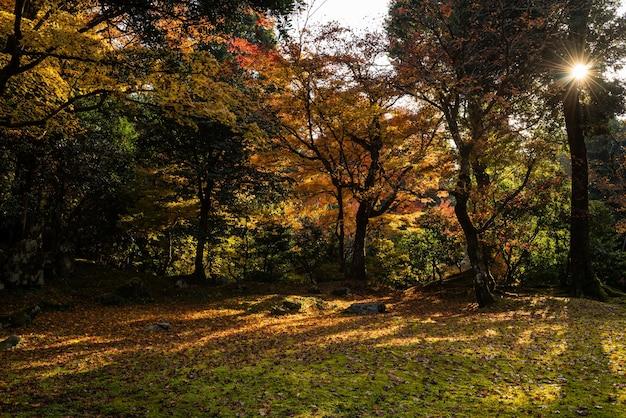 가을철에 화려한 나무 잎으로 가득한 화려한 일본 사원 정원, 그 사이에 태양이 나타납니다.