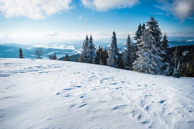 맑은 서리가 내린 겨울 날에 푸른 하늘과 흰 구름에 대 한 가문비 나무 숲으로 덮여 산과 언덕의 눈 덮인 슬로프에서 화려한보기