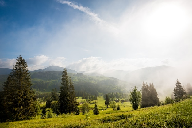 Gorgeous view of tall fir trees growing on green hills and mountains on a sunny foggy and summer day