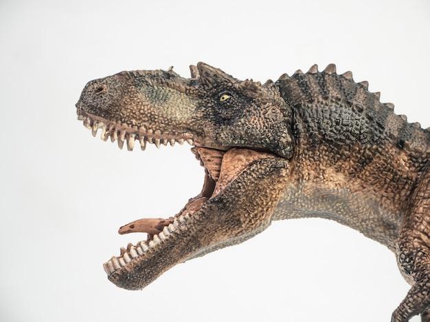Gorgosaurus dinosaur