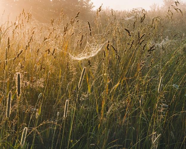 Паутина в траве на утреннем солнце. в траве, влажной от утренней росы.