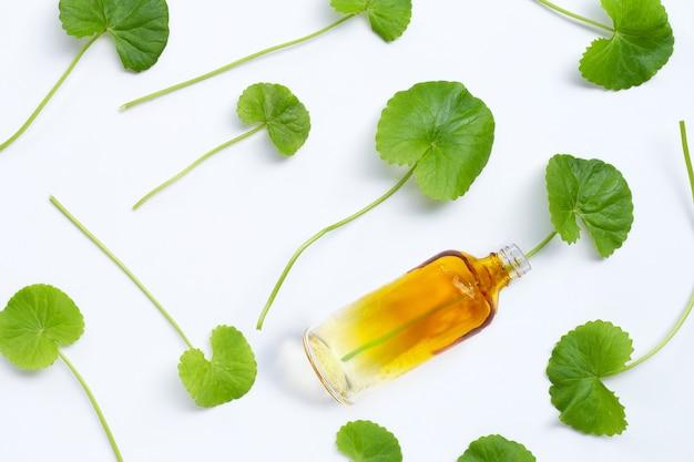 Gotu kolaは、白い背景にボトルと葉。