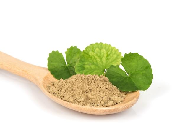 Gotu 콜라 또는 centella asiatica 녹색 잎과 흰색 표면에 고립 된 분말.