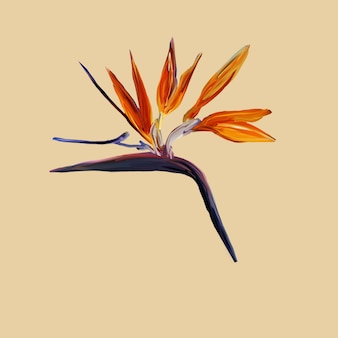 Gouache painted bird of paradise. watercolor illustration with realistic branch of strelitzia isolated on yellow. bird of paradise flower painted on mint botanical illustration.