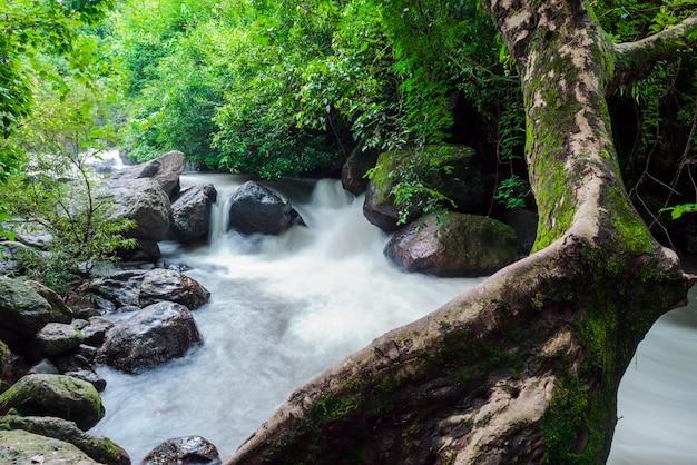 ナコンナヨック県の南grの滝