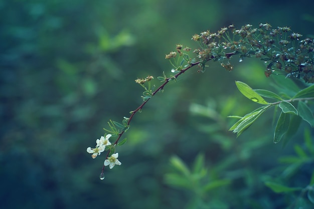 Изящный белый цветок опирается на длинную ветку, покрытую капельками росы.