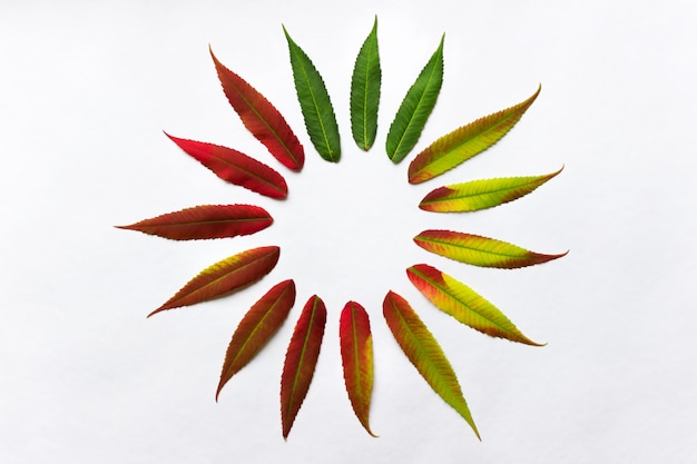 Gradient colored leaves arranged in a circle. autumn leaf coloration.