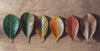 Gradient leaves on different stage autumns senescence