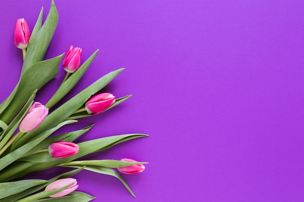 Gradient pink tulip flowers with copy space