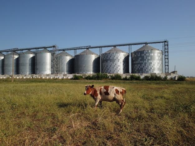 Зерновой элеватор металлический элеватор в сельскохозяйственной зоне хранения сельского хозяйства для урожая зерна